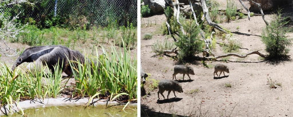 anteater-warthog